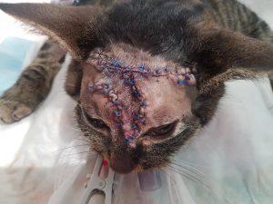 włókniakomięsak u kota