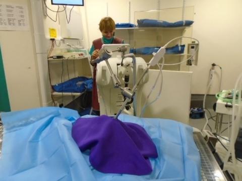 OnkolVet kot - operacja włókniakomięsak